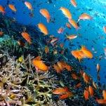 美しいサンゴの海を守ります