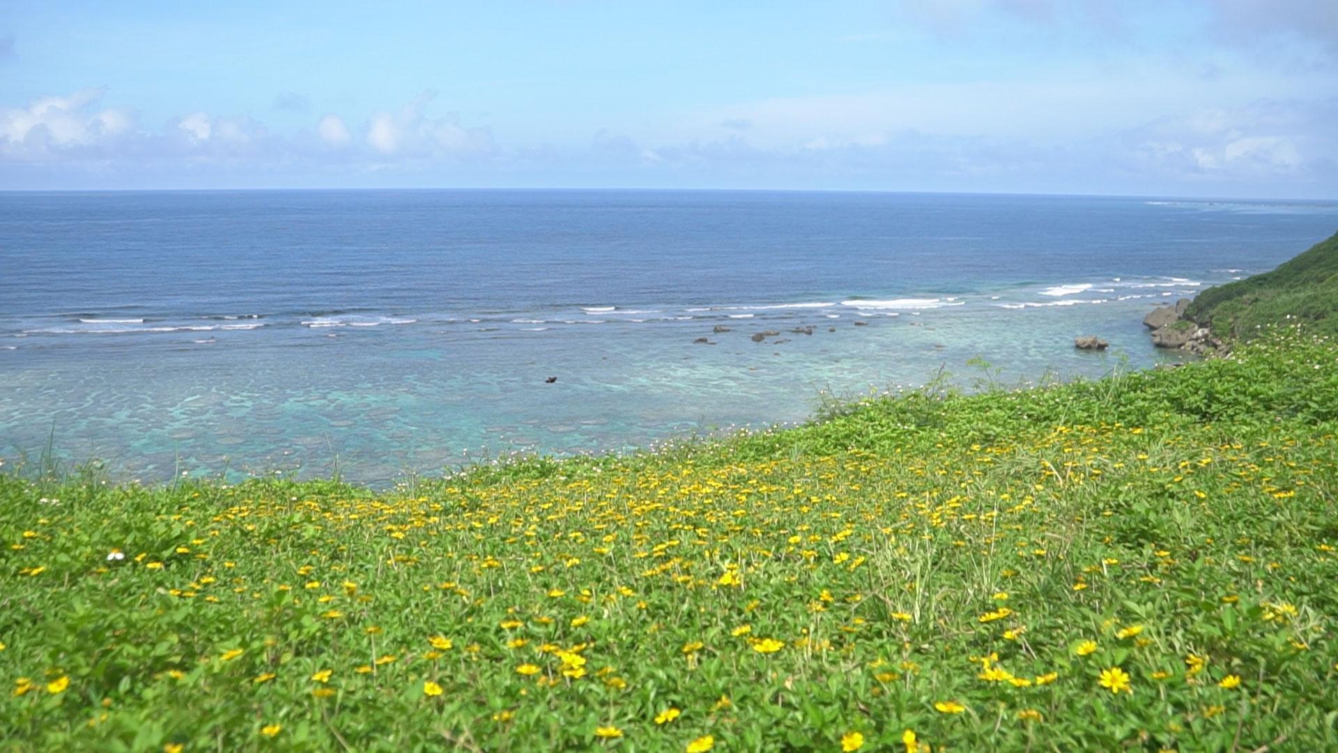 第2回エコの島コンテスト開催決定