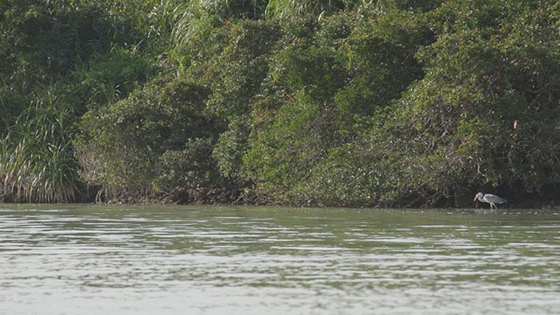 ラムサール条約湿地「与那覇湾」
