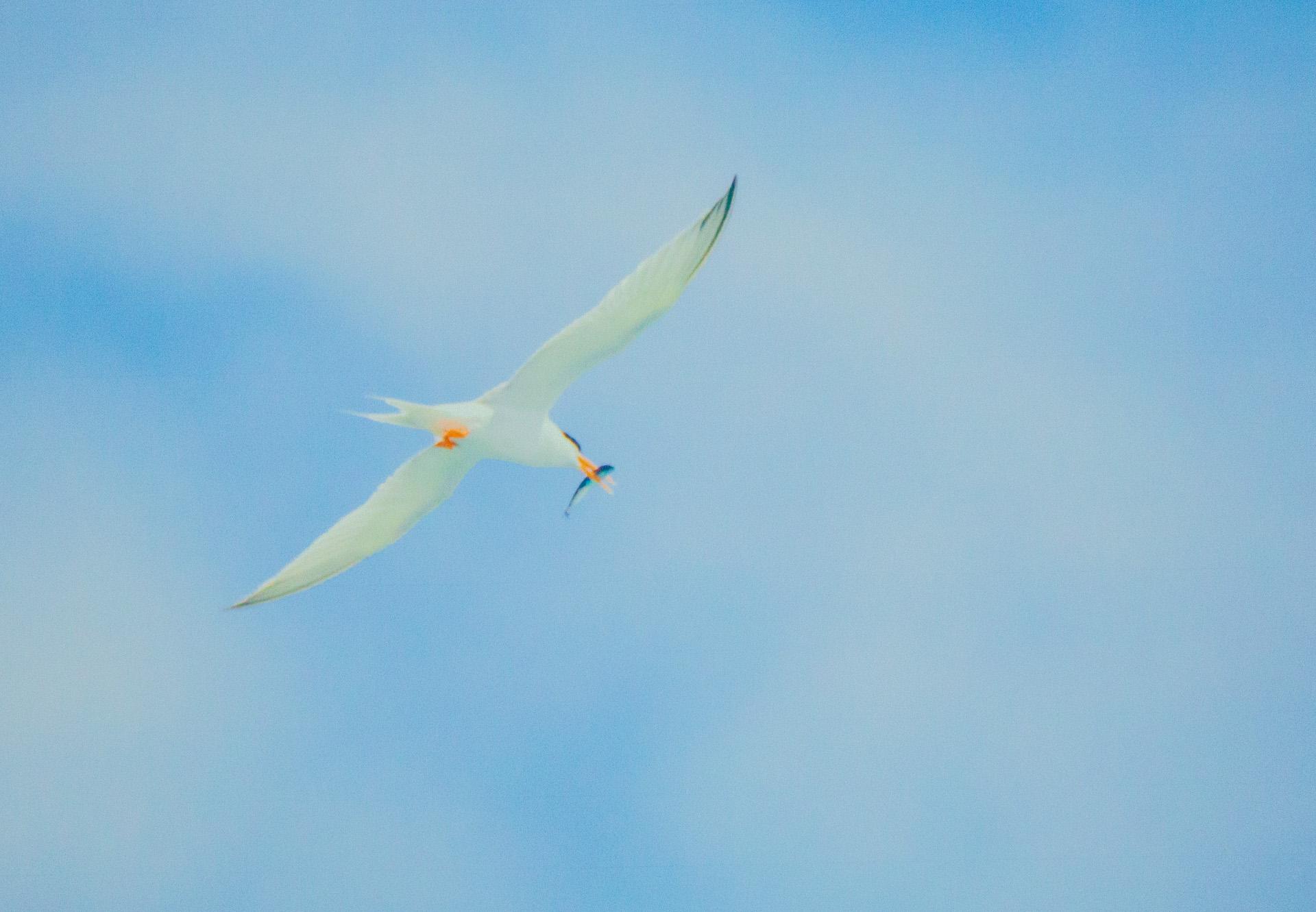 身近な鳥を知ることから始める『愛鳥週間』