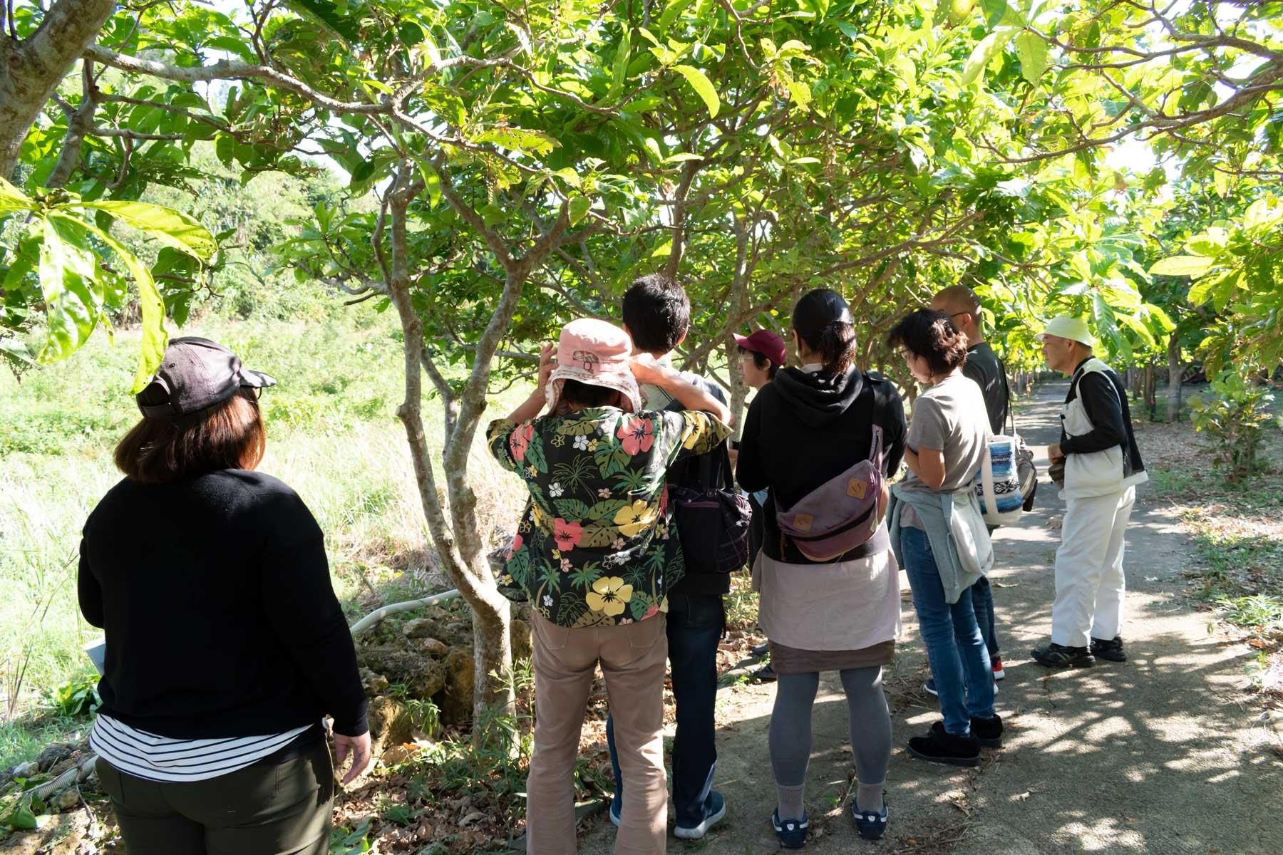 【エコ活体験隊】水と緑の集い:サガリバナ散策と育て方の教室