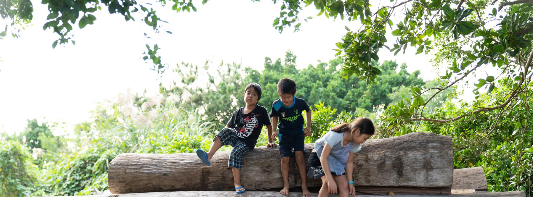 【エコ活体験隊】みて、さわって、宮古島の木を知ろう!