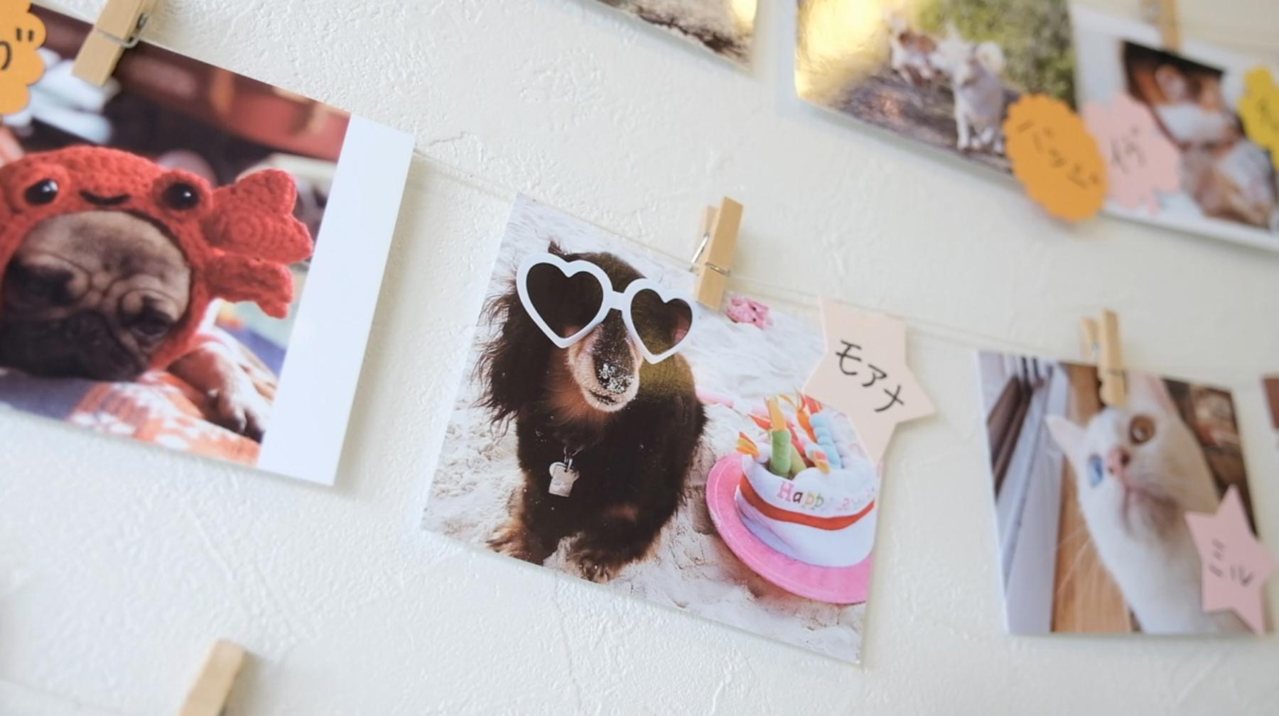 【理想通貨】使えるお店のご紹介 「麻布十番犬猫クリニック 宮古島分院」さん