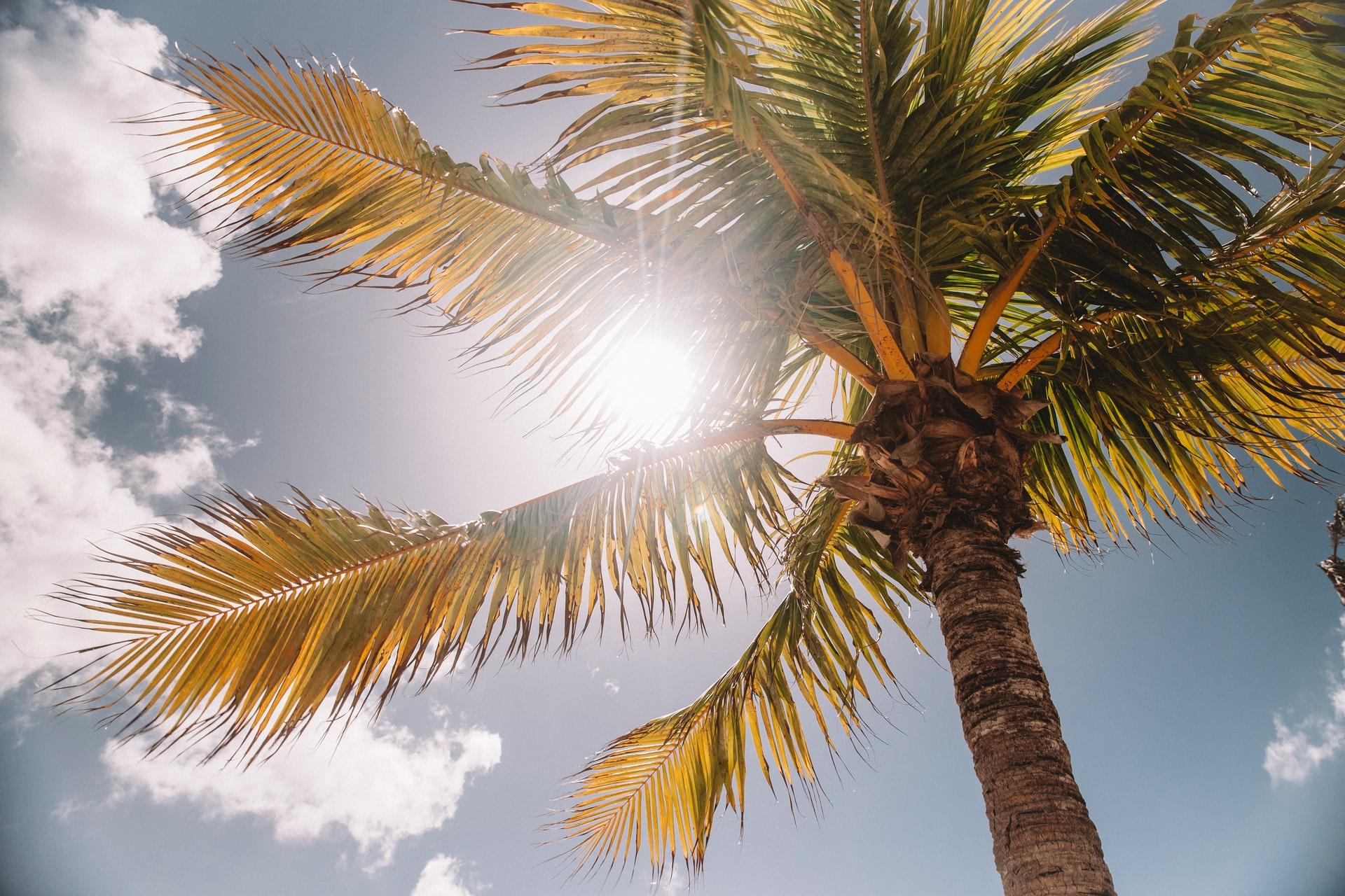 もう始まっている!?宮古島の地球温暖化