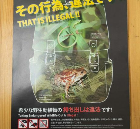 謹賀新年:島の宝「希少動植物」を守るために